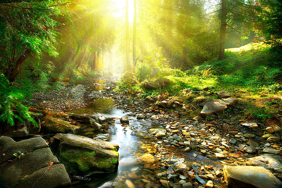 Mountain River with, forest landscape. T