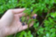 foraging-frockens-medium.jpg