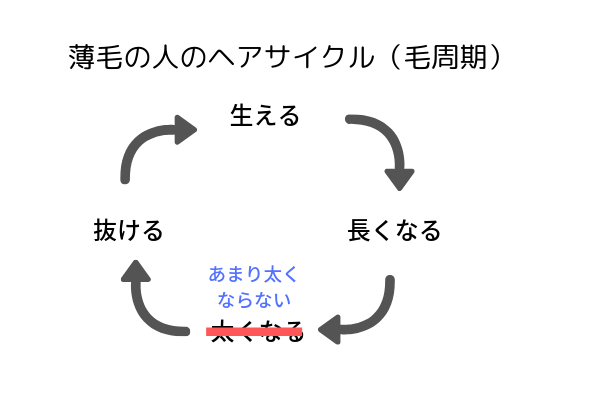 薄毛の人のヘアサイクル(毛周期)