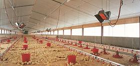Criadoras simples para aves, calefacción planteles avícolas