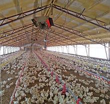 SBM calefactores a gas para granjas avícolas, calefacción en avicultura