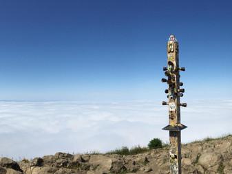 Mission Peak Regional Preserve: UPHILL BATTLE (Fremont, CA)