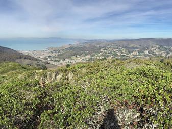 Montara Mountain Trail at San Pedro Valley County Park (NorCal)