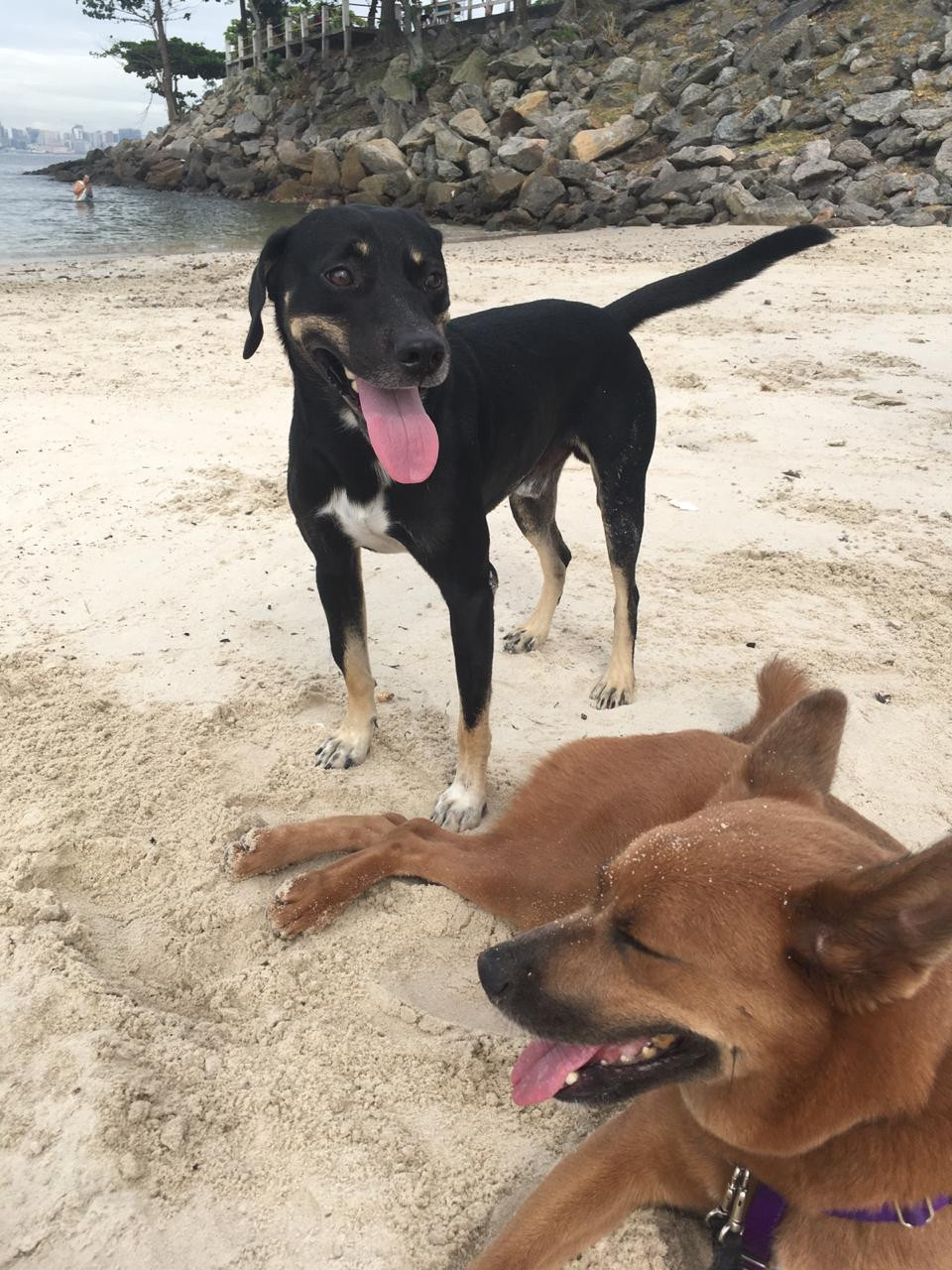 Cachorro macho e cadela fêmea na praia