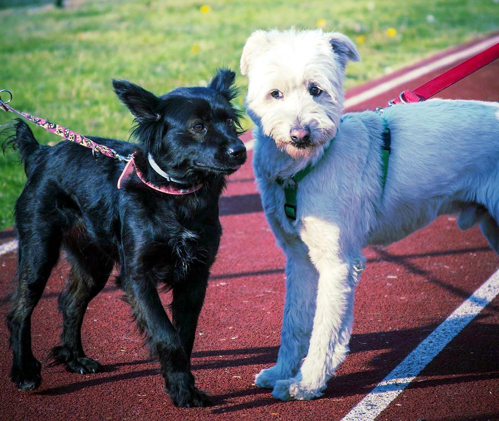 """Um adestrador profissional pode te ajudar a interpretar o que seu cão """"diz"""" e a """"dizer"""" a ele o que você espera dele."""