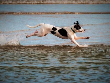 Transformar Cães Agitados em Cães Felizes