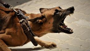 Não Piore a Agressividade / a Reatividade do seu Cachorro