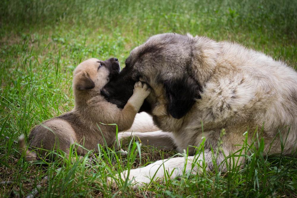 Imprinting e Socialização com orientação de adestrador profissional treinopet.cão.br adestramento em domicílio