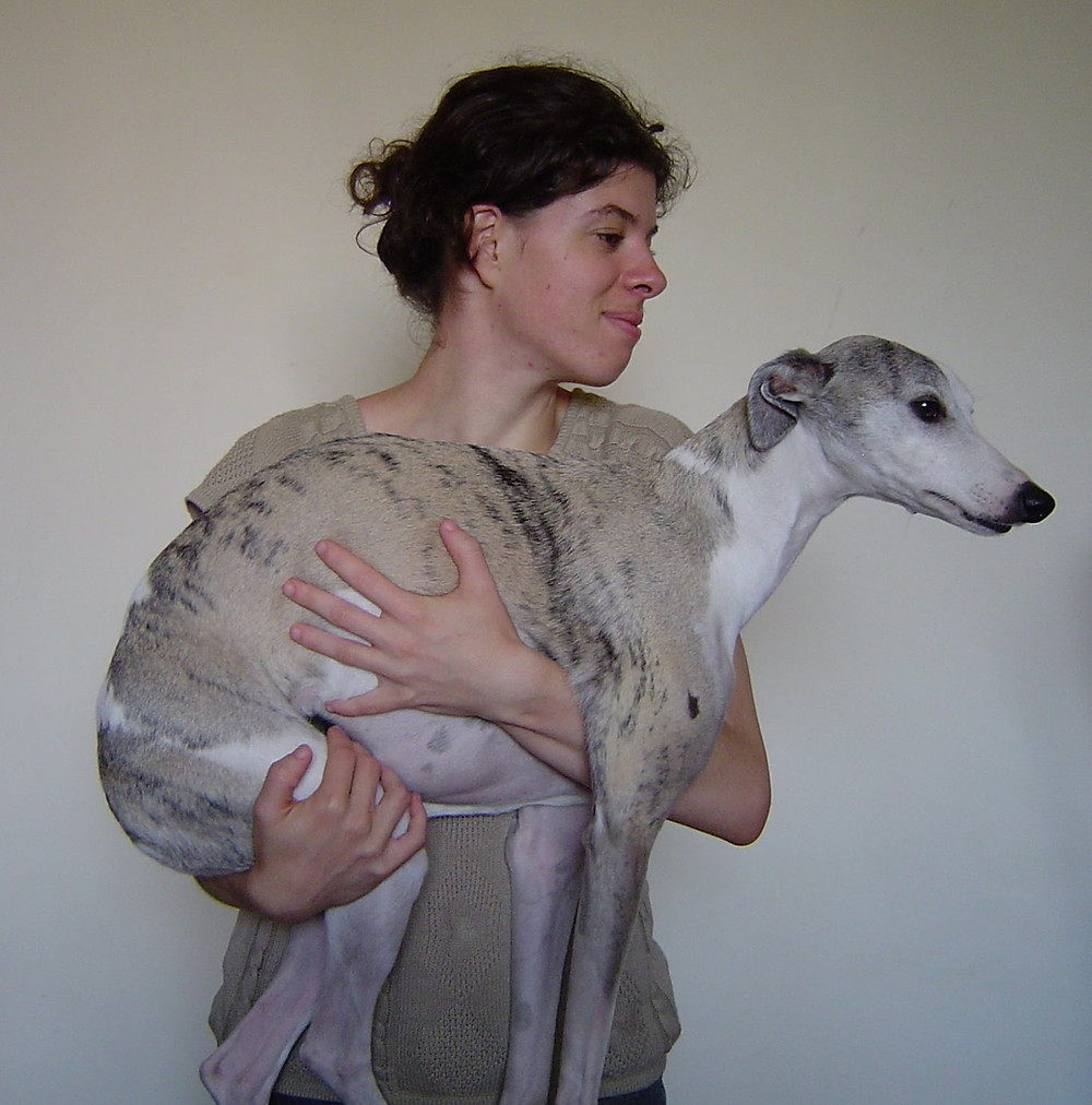 cadela grávida, como levantar e carregar no colo