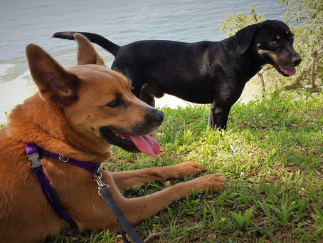 """O que é """"Reatividade"""" em cães?"""