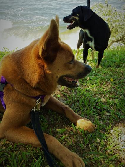 Shiba e Feijão 2