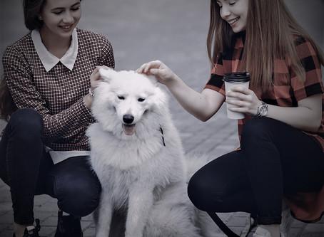 A Culpa Nunca É do Cachorro! (parte 1 de 3)