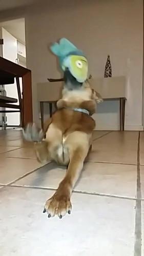 Shiba e alien de pelúcia
