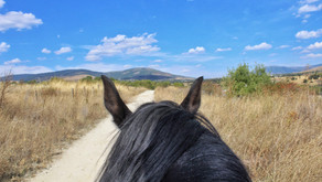 Horseback Riding in Northern Madrid