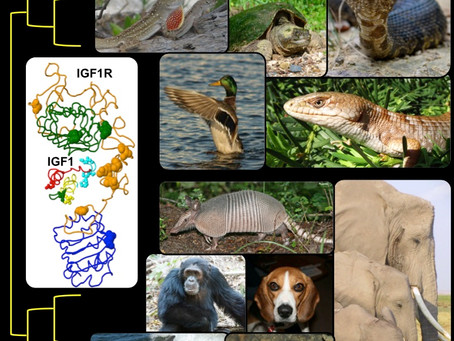 New Publication in PNAS: Rapid Evolution of the Insulin-signaling Molecular Network across Reptiles