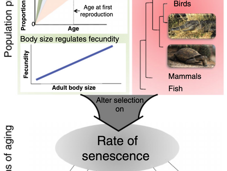 New Publication on how reptiles can help us understand how and why animals age!