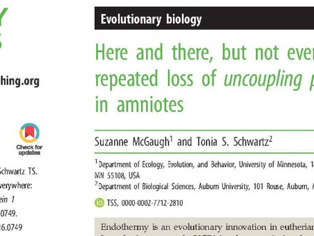 New Paper: repeated loss of UCP1
