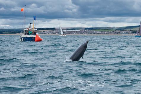 Dolphins-Weymouth-885.jpg