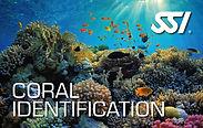Coral Identification.jpg