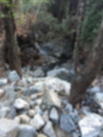 Rocks In Woods.jpg