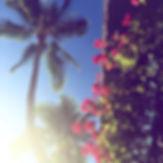 ハワイイリカイマリーナのブーゲンビリア