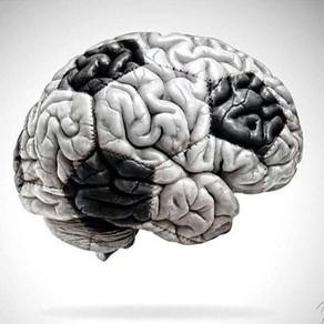 The Betting Brain