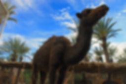 Casarural Maroc Agdz