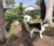 USER_SCOPED_TEMP_DATA_orca-image--154989