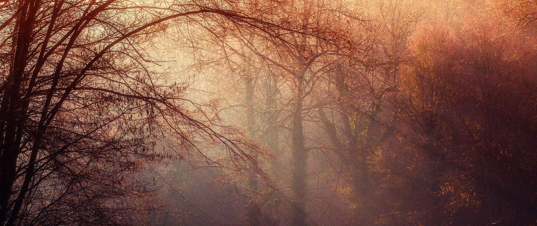 PAGE OU NOUS TROUVER forest-1225983_1920