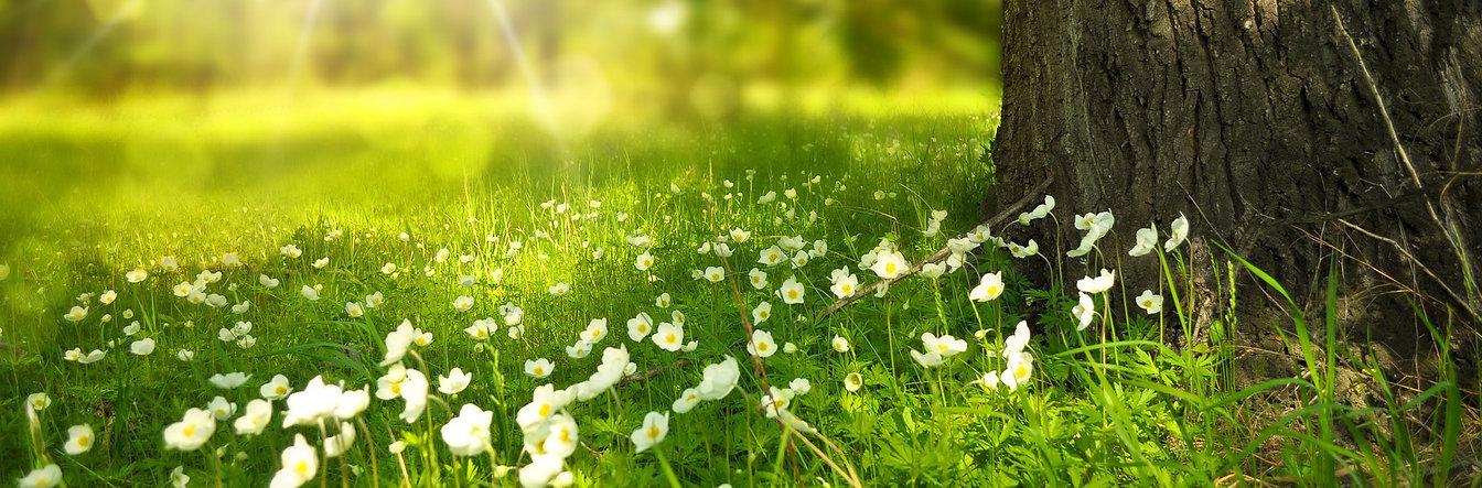 spring-1912x630_54066c12c9bc872911f98d41