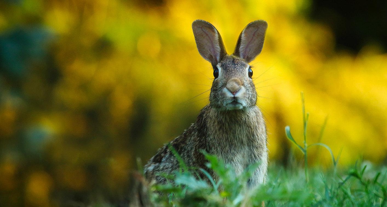 rabbit-1882699_1920-1413x758.jpg