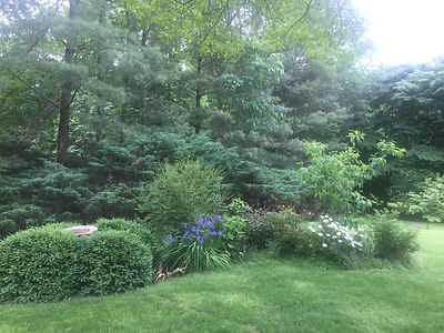Perennial gardens are planted in a ring around the house. Boxwoods insure year-round structure and interest, while sweet autumn clematis is left to run wild through the daturas and hydrangeas in the fall.Farmette.trees.JPG.jpg