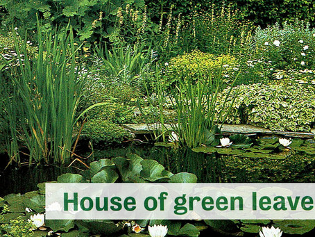 House Of Green Leaves - House Beautiful