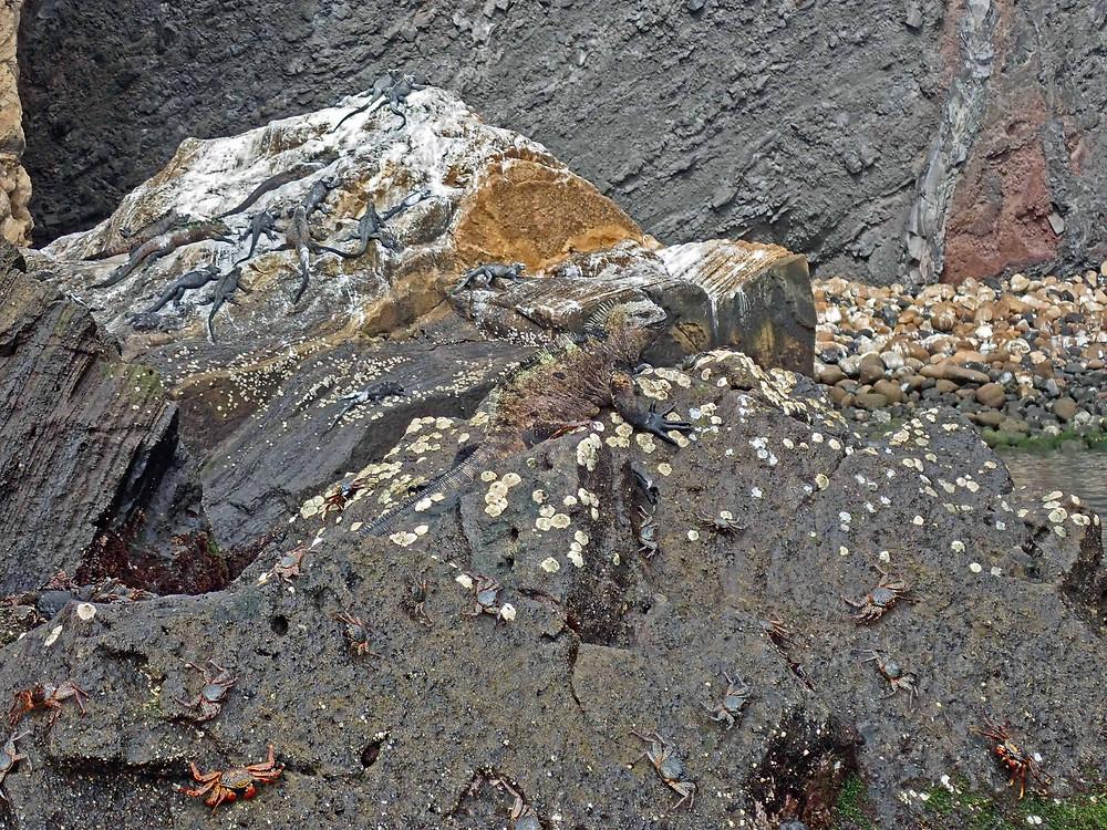 Hidden critters, carbs, marine iguanas, more