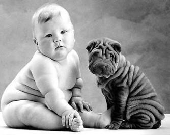 Vandaag gaat het over honden (2).