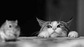 Vandaag gaat het over muis.