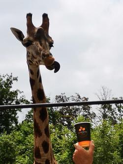 Cup_à_Pairi_Daisa_Girafe