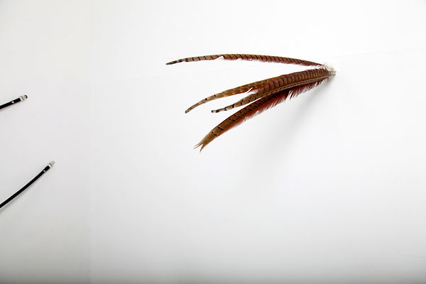 Simona Brinkmann, detail of exhibition view, Blank Stare, Flat Hollow at Five Years, London. Buffere, feathers and detail of Arm's Length, black leather strap and metal fitting sculptural installation, contemporary art.