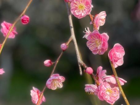 春はちゃんときてる🌷