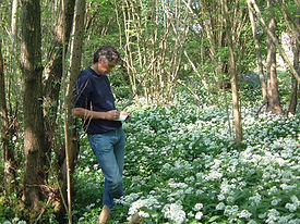 The artist Chris Bourne sketching amongst the wild garlic in the Surrey Hills.