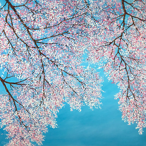 Cherry Blossom Cascading 100x100cm