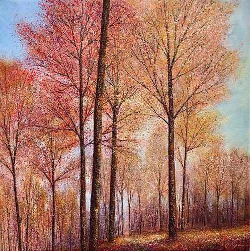 Light through Autumn trees 71x71cm