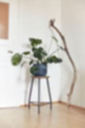 Interiorfotografie: Monstera Pflanze