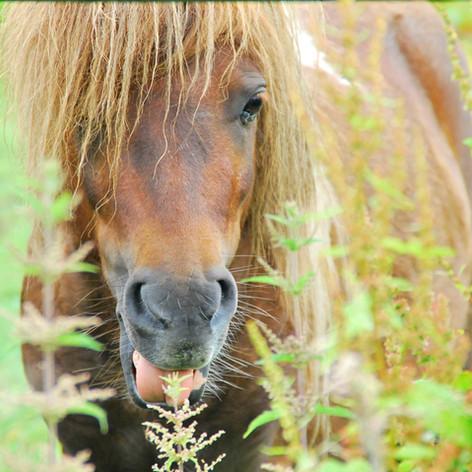 Maison Marie Pony.jpg