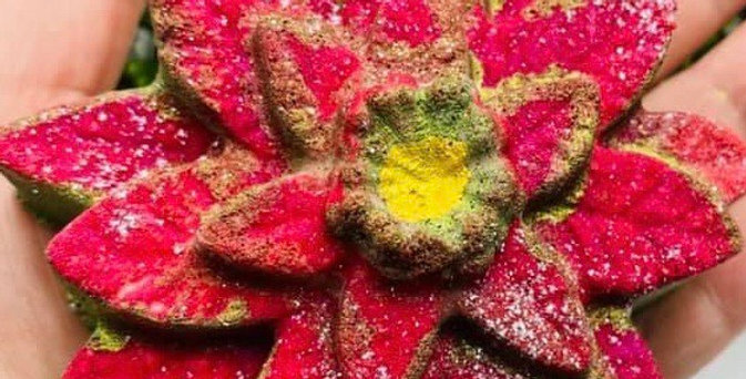 Holiday Poinsettia Plastic Bath Bomb Mold