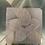 Thumbnail: Smiling Star Fish Plastic Bath Bomb Mold