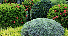 hedges-and-shrubs-image