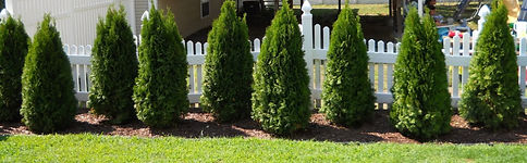 E-D-Landscaping-LLC-services-page-banner