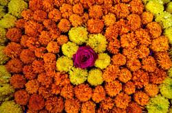 Composition de fleurs colorées inde