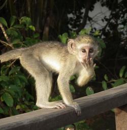 monkeyooh